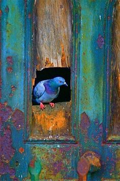Love the patina of the door, the ancient paint, the rust, and the lovely blues and greens. The bird is an added bonus.