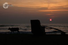 Cow and a Boat by Chaminda Silva on 500px
