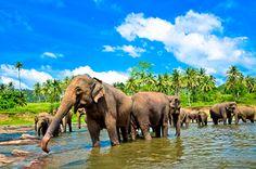 Turistické informace - Srí Lanka | STUDENT AGENCY | Dovolena.cz