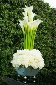 The first thing you should know about the Calla lily is that it's not actually a lily. Aside from that little secret, the Calla is pretty upfront about all it has to offer. Wedding Arrangements, Wedding Centerpieces, Floral Arrangements, Wedding Decorations, Centrepieces, Calla Lily Centerpieces, White Peonies, White Roses, White Flowers