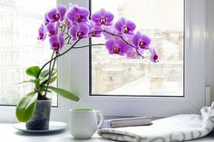 Home Interior Vintage Orchid plant care: Make the orchid to bloom all year round - Little Piece Of Me.Home Interior Vintage Orchid plant care: Make the orchid to bloom all year round - Little Piece Of Me Orchid Plant Care, Orchid Plants, Orchid Roots, Moth Orchid, Orchid Potting Mix, Orchid Varieties, Old Farmers Almanac, Decoration Plante, Gardening