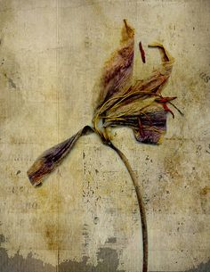 Old flower series by SM 2011, via Flickr