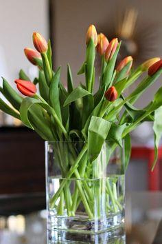 tulips via @mystylev