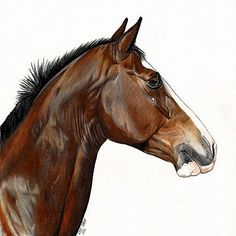 Kate Spratt Art | Horse Portraits