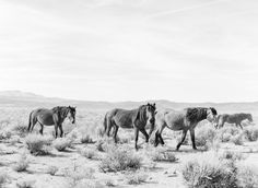"KT Merry Fine Art Print Shop | Mustangs of the Sage | 18"" x 14.5"" 