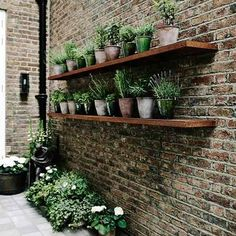 Roof Garden Shelves - After a complete gut job, interior designer Jane Gowers created a light filled family home - small gardens on HOUSE by House & Garden