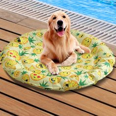 Bulldog Puppies For Sale, Dogs And Puppies, Dog Cooling Mat, Training Pads, Buy Pets, Cool Beds, Pet Shop, Pet Supplies, Pet Dogs