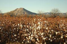 Las Cruces, New Mexico - Wikipedia, the free encyclopedia