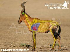 Africa Hunting, Boar Hunting, Safari, Giraffe, Elephant, Impala, Archery, Shots, Wildlife