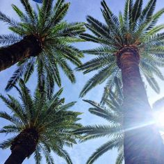 Just a snapshot from my hotel in Las Vegas. Ya got to love palm trees.