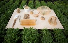 Grow Vegetables Roza Janusz creates sustainable food packaging that grows like a vegetable Plastic Food Packaging, Food Packaging Design, Kombucha Starter, Sustainable Food, Sustainable Design, Edible Food, Edible Garden, Growing Vegetables, Food Design