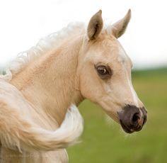 Photos »Horses» naturbildnis.de