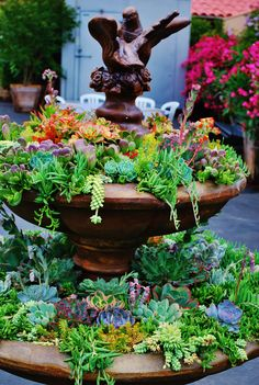 succulents in fountain