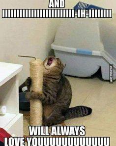 Memes Humor, Funny Dog Memes, Crazy Funny Memes, Really Funny Memes, Funny Relatable Memes, Funny Cats, Funny Stuff, Funny Cat Pics, Cat And Dog Memes
