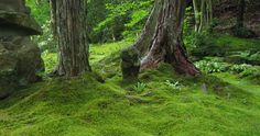 Google Image Result for http://www.gameshaper.net/kyonoki/images/moss_statue_001.jpg