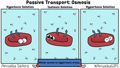 The Amoeba Sisters GIFs (animations) are a collection we created to supplement our videos. GIFs are popular on social media, and they are AWESOME in science for animating vocabulary or scientific processes!