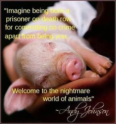 they are so precious! EAT KOSHER OR HALAL MEATS! They kill animals in a humane way!!