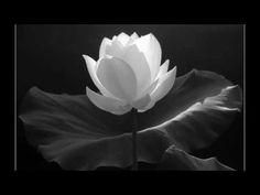 THIỀN TẬP VÀ TẦM TỨ - Chơn Tín Toàn - YouTube