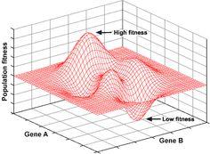Genetic drift example (4 of 4)