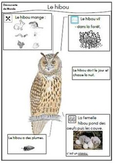 The owl - Daniel Messer N Animals, Nocturnal Animals, Forest Animals, Animals For Kids, Preschool Themes, Preschool Science, French For Beginners, Animal Worksheets, French Education