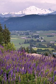 Abbotsford Hillside with farmland below and Mt Baker as a backdrop! GORGEOUS!