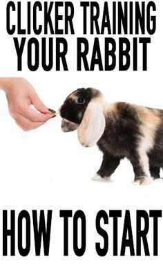 Clicker training your rabbit: how to start - Kaninchen Pet Bunny Rabbits, Baby Bunnies, Cute Bunny, Rabbit Toys, Bunny Toys, Pet Rabbit, Lionhead Rabbit, Rabbit Farm, Rabbit Life