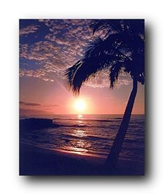 Simply Outstanding! This Charming Ocean Beach scenery poster will bring a feel of tropical paradise into your home. This wall poster displays the image of a palm tree near the ocean beach with a stunning sunset view which looks very attractive and charming that will defiantly add a beautiful glance at your place. This Hawaiian Sunset At Ocean Beach Scenery Nature Art Print Poster will become the centre of attraction and grab lot of attention.