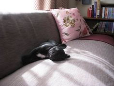5 Tips For Preparing Your Home For A New Puppy