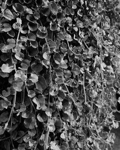 #analog #analogfilm #analogcamera #analogvibes #analogphotography #analogphoto #film #filmcommunity #filmphotography #filmsociety #filmshooter #nature #naturephotography #nature_photo #photo Film Photography, Nature Photography, Nature Photos, How To Dry Basil, Seal, My Arts, Herbs, Plants, Instagram