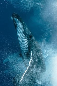 Beautiful Humpback photo. Go see this in your life. East Coast or West Coast it is a life changing thing.