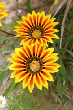 Sunshine-Flowers Djerba Nature, Plants, Naturaleza, Plant, Nature Illustration, Off Grid, Planets, Natural
