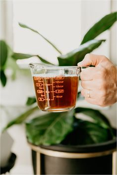 The number 1 that I make with leftover coffee (PS: I don't drink it) House fur - Dekoration Ideen 2019 Fertilizer For Plants, Organic Fertilizer, Liquid Fertilizer, Coffee Plant, Drip Coffee, Coffee Coffee, Drinking Coffee, Coffee Maker, Hanging Plants
