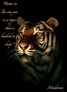 Image result for tiger inspirational quotes
