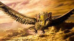TSFH - Kingdom Skies