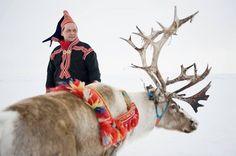 Sami, Lapplander and his Reindeer