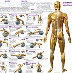 Types Of Swiss Ball Ab Exercises 66