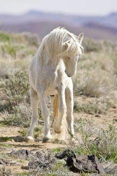 Awe, sweet creamy white horse in the desert brush.