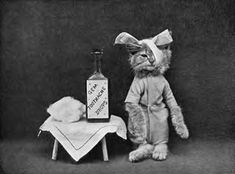 Creepy taxidermy kitten. Naturally deceased photographed by Walter Potter sometime from late 1800's to early 1900's.