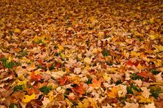You haven't lived until you've jumped into a pile of leaves, but did you know leaf piles are for more than just a fun photo opportunity?  Check out these 5 easy ways to deal with those never-ending leaves AND enhance your garden at the same time! http://tinyurl.com/lcaxsa9