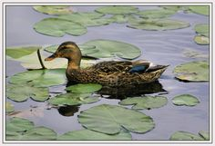 Nature in Blaasveld, Belgium (duck nature reserve) - a photo by magda 1980
