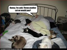 And I thought trying to sleep with 3 dogs was bad wanting bed space :)