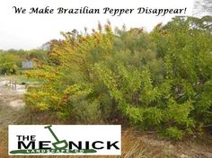 The Mednick Landscape Company of Palm City see's on a daily basis how much land is stolen by overgrown brush and invasive species.  We return that land to you.  You will be amazed to rediscover  how much more land there is on your property once you remove the brush!