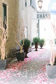 We adore the idea of an ombré petal-strewn entry for a wedding or bridal shower, like this one Pastel Colour Palette, Creative Wedding Ideas, Event Company, Flower Petals, Celebrity Weddings, Event Decor, Luxury Wedding, Event Design, Summer Wedding