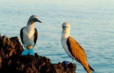 #sanctuaryretreats #virtualsuitcase #galapagos