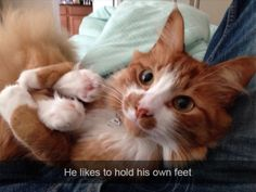 Kitty likes to hold his own feet train-to-win.tumblr