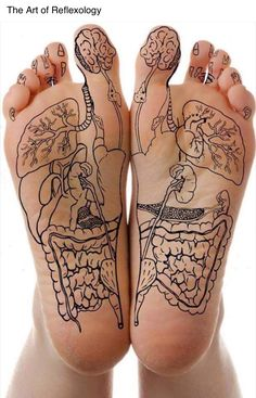 Reflexology drawn out guide on your foot to know where to rub for what body…