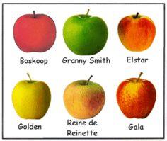 """Une idée pour la semaine du goût : prendre la pomme comme """"fil conducteur"""""""