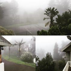 I love Kloof's misty days. In the Greig's garden in Abrey Rd, Kloof, KZN