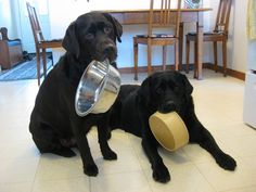 Basic Guidelines to Labrador Nutrition