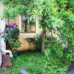 Maisema kuin Tallinnasta? Ei vaan Järvenpäästä. Näkymä #työhuone #piha #järvenpää #tallinna #rhododendron #rappio #romantiikka #puutalo #konttorirotat #futuremarja